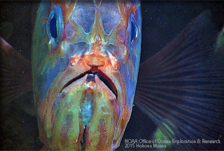 Close up of a multi-colored fish face.